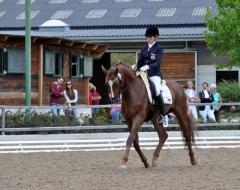 Pferdefestival 2013