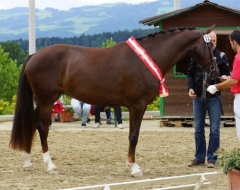 Pferdefestival 2014