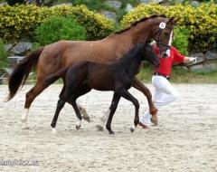 Pferdefestival 2016