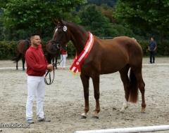Warmblut - Pferdefestival 2016